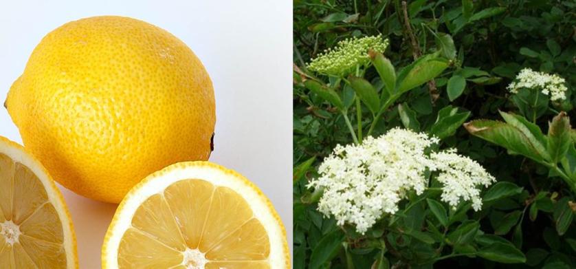 citron og hyld