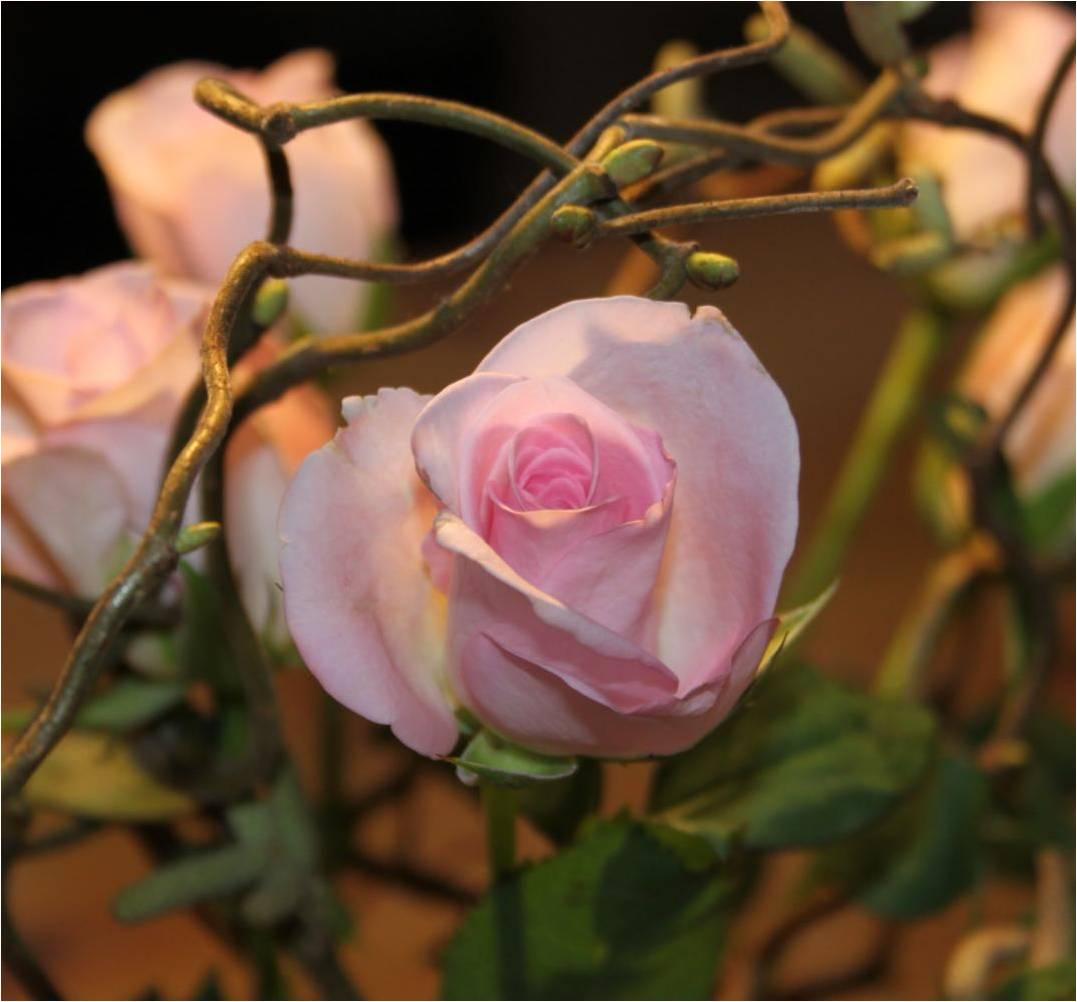 den yndigste rose blive gravid